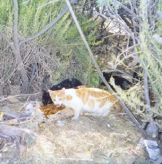 Feral Cats in Malta