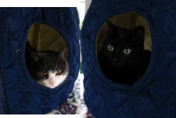 Willy and Newman in their new PBS teepee bed
